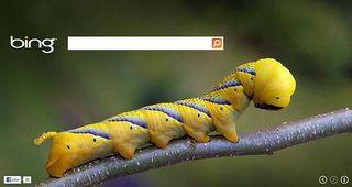 Bing-desktop-search-box